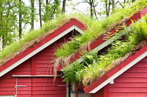 grass growing on green roof